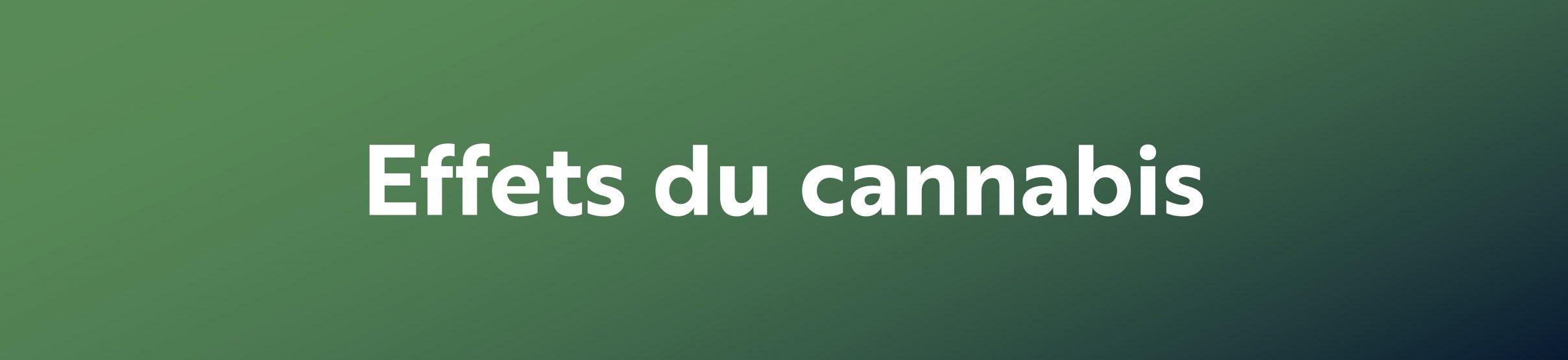 effet du cannabis